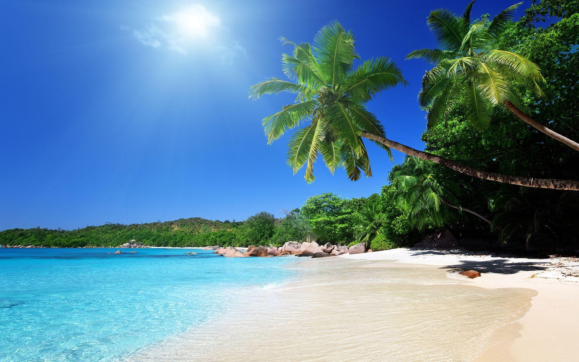 136169 скачать обои Природа, Пляж, Песок, Тропики, Пальмы - заставки и картинки бесплатно