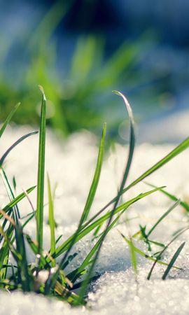 24757 скачать обои Растения, Трава, Снег - заставки и картинки бесплатно