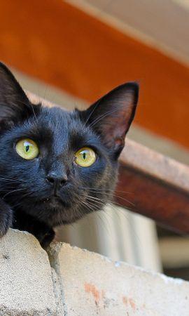 50374 скачать обои Животные, Кошки (Коты, Котики) - заставки и картинки бесплатно