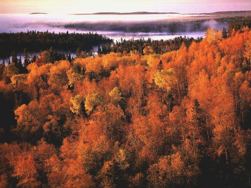 30922 download wallpaper Landscape, Trees, Autumn screensavers and pictures for free