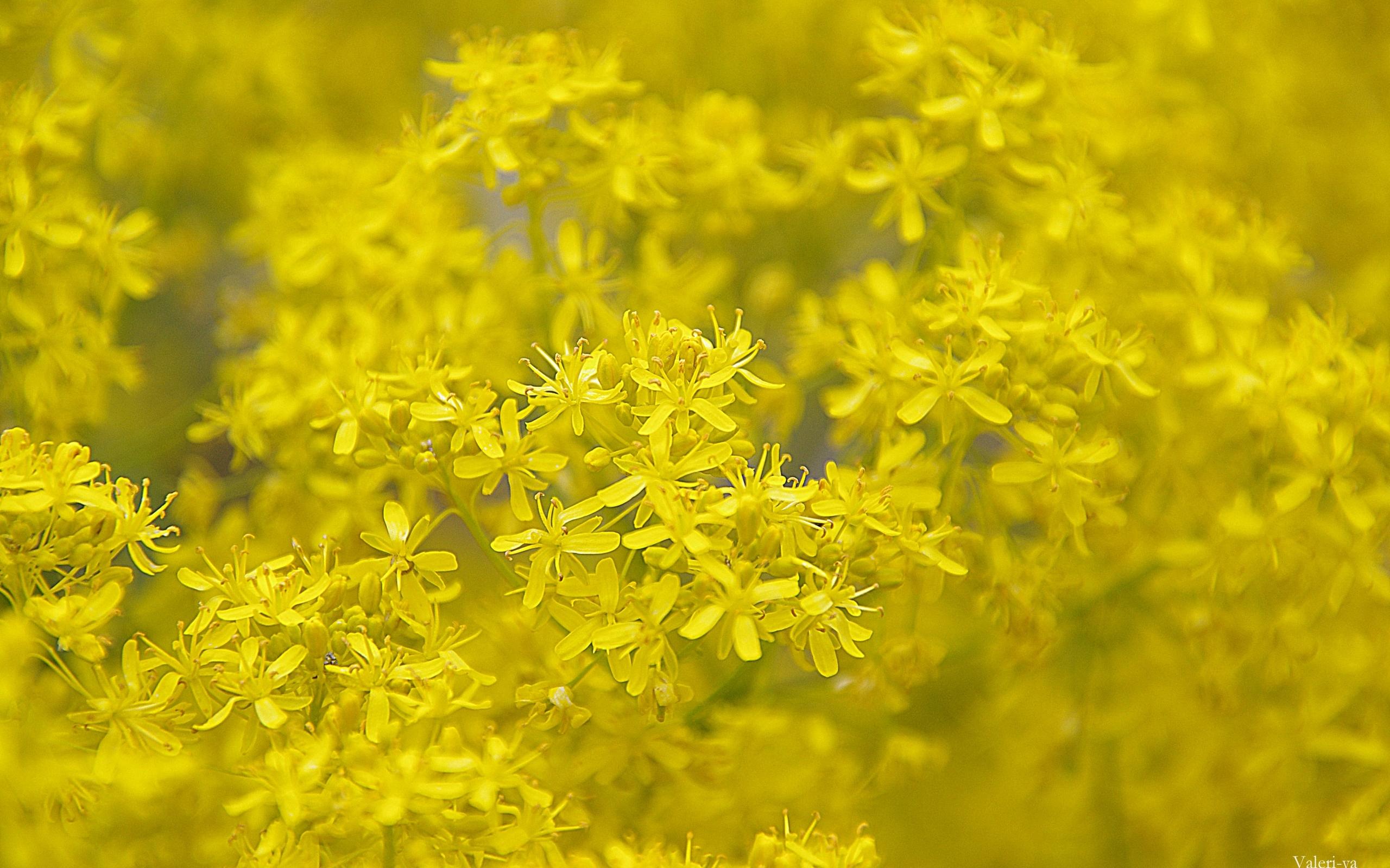 Скачать картинку Фон, Растения, Цветы в телефон бесплатно.