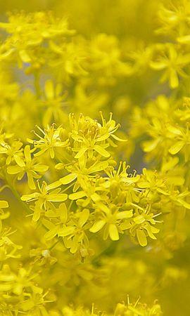 27454 скачать обои Растения, Цветы, Фон - заставки и картинки бесплатно