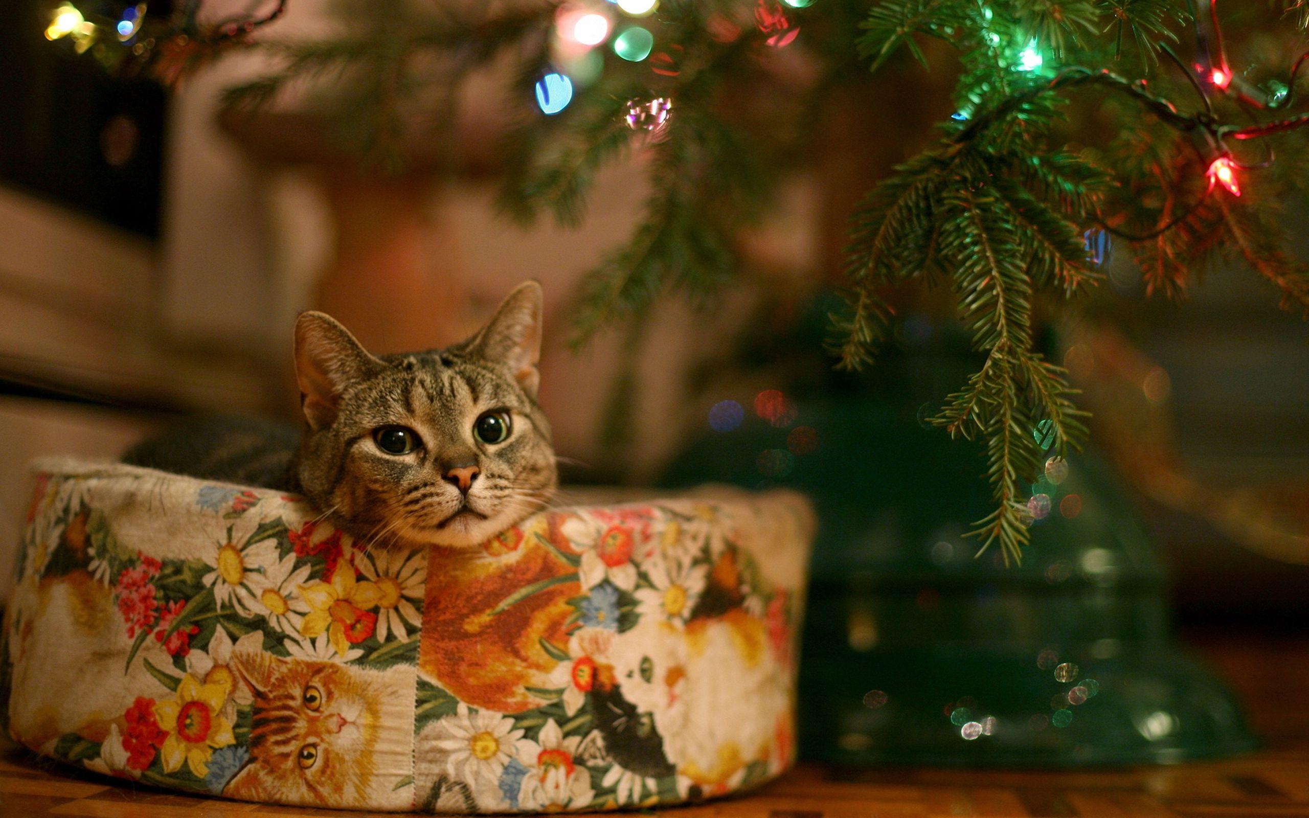 145505 Salvapantallas y fondos de pantalla Año Nuevo en tu teléfono. Descarga imágenes de Animales, Gato, Año Nuevo, Árbol De Navidad, Guirnalda gratis