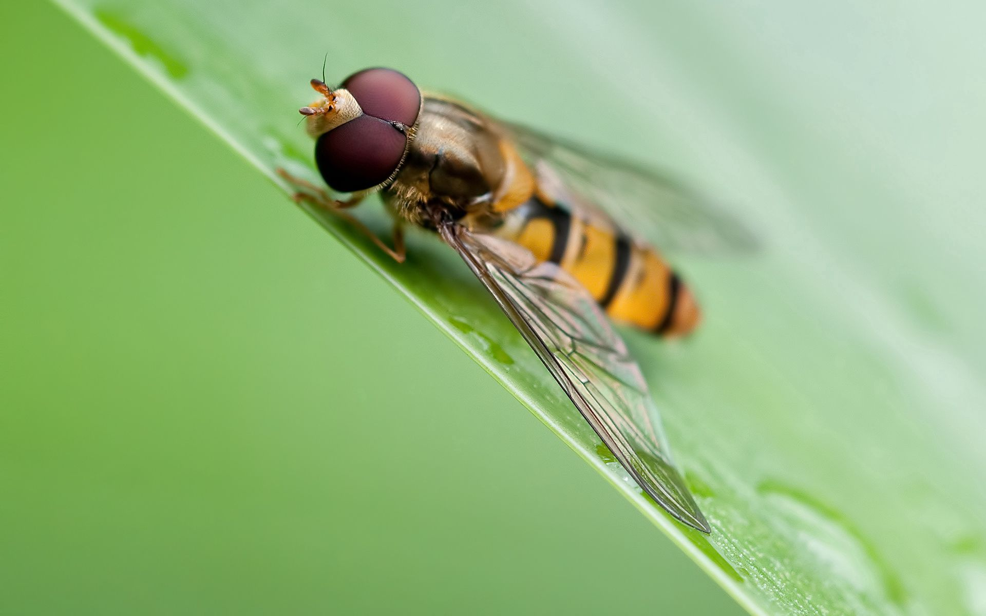 85505 download wallpaper Macro, Bee, Grass, Leaves, Surface screensavers and pictures for free