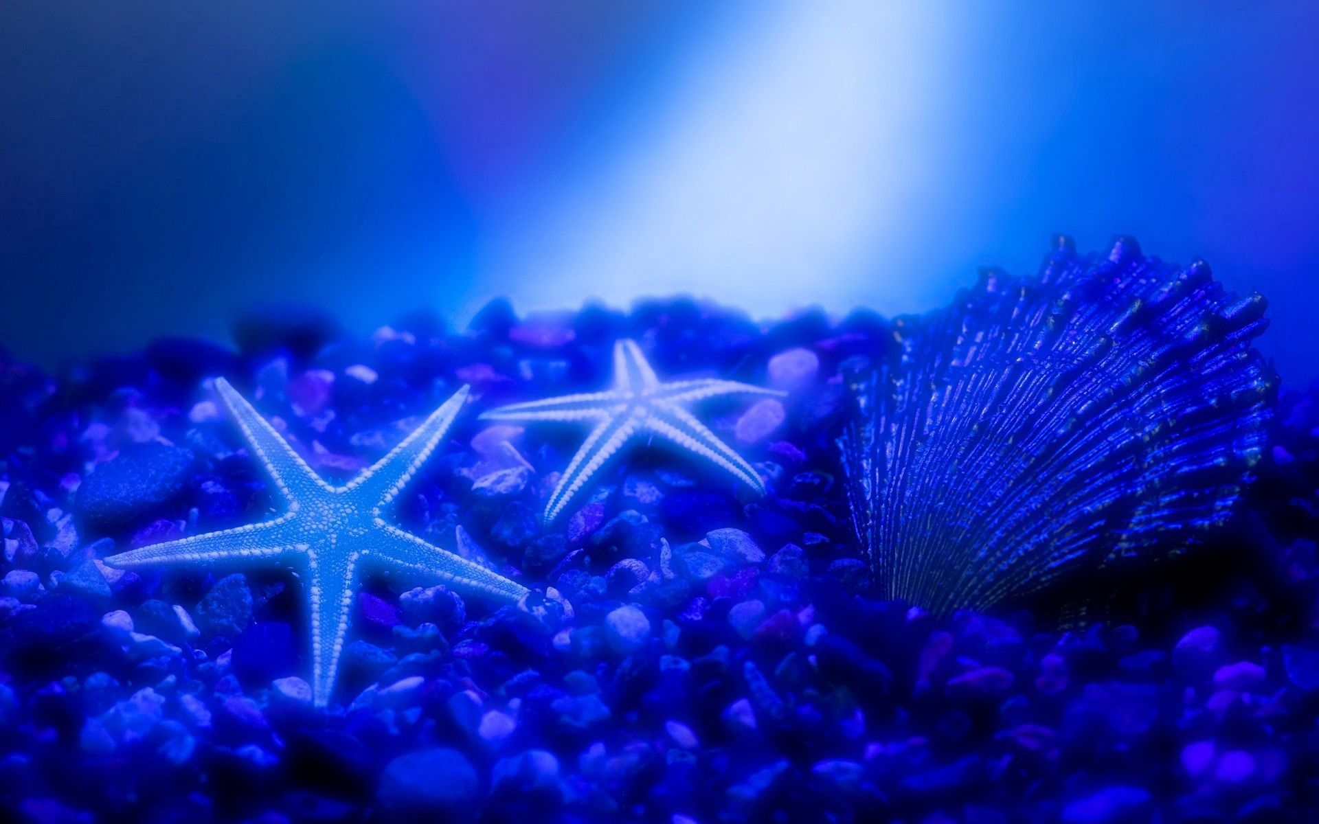 120907 download wallpaper Animals, Shell, Starfish, Underwater World screensavers and pictures for free