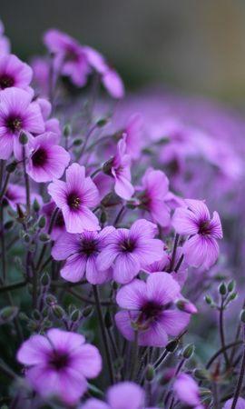 22834 скачать обои Растения, Цветы - заставки и картинки бесплатно