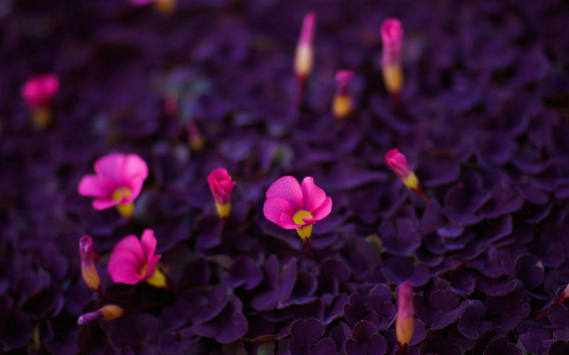 106538 скачать обои Цветы, Красота, Яркие, Маленькие - заставки и картинки бесплатно