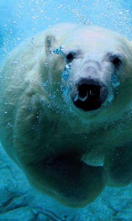 45829 baixar papel de parede Animais, Bears - protetores de tela e imagens gratuitamente