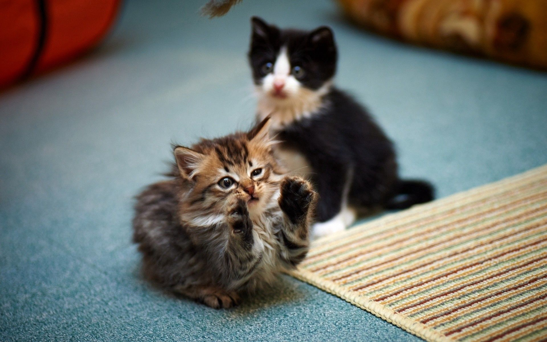 142769 download wallpaper Animals, Kittens, Couple, Pair, Playful, Cute screensavers and pictures for free