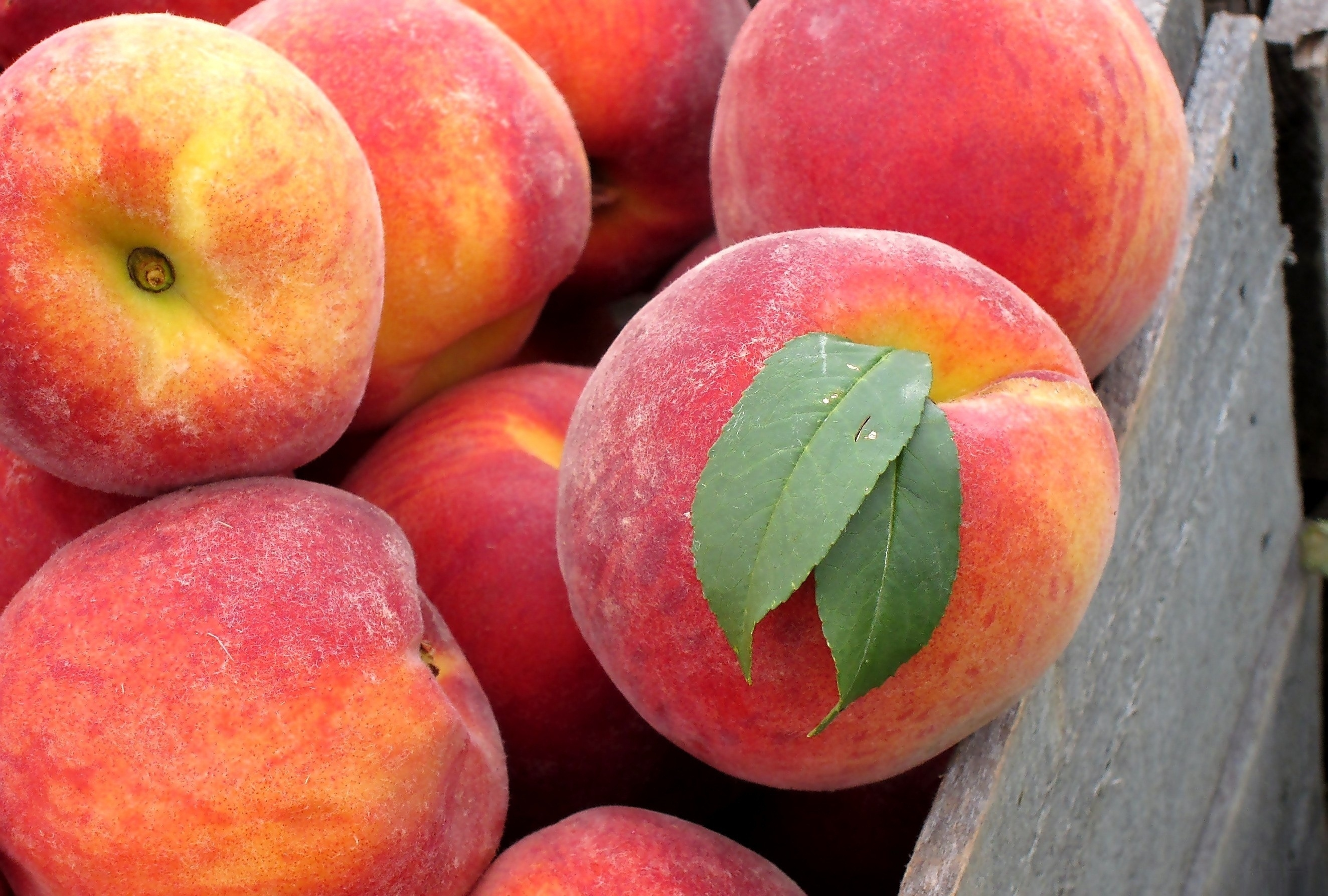 127119 download wallpaper Food, Peaches, Box, Leaves, Fresh, Fruits screensavers and pictures for free