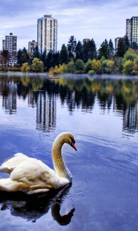18241 download wallpaper Animals, Birds, Swans screensavers and pictures for free