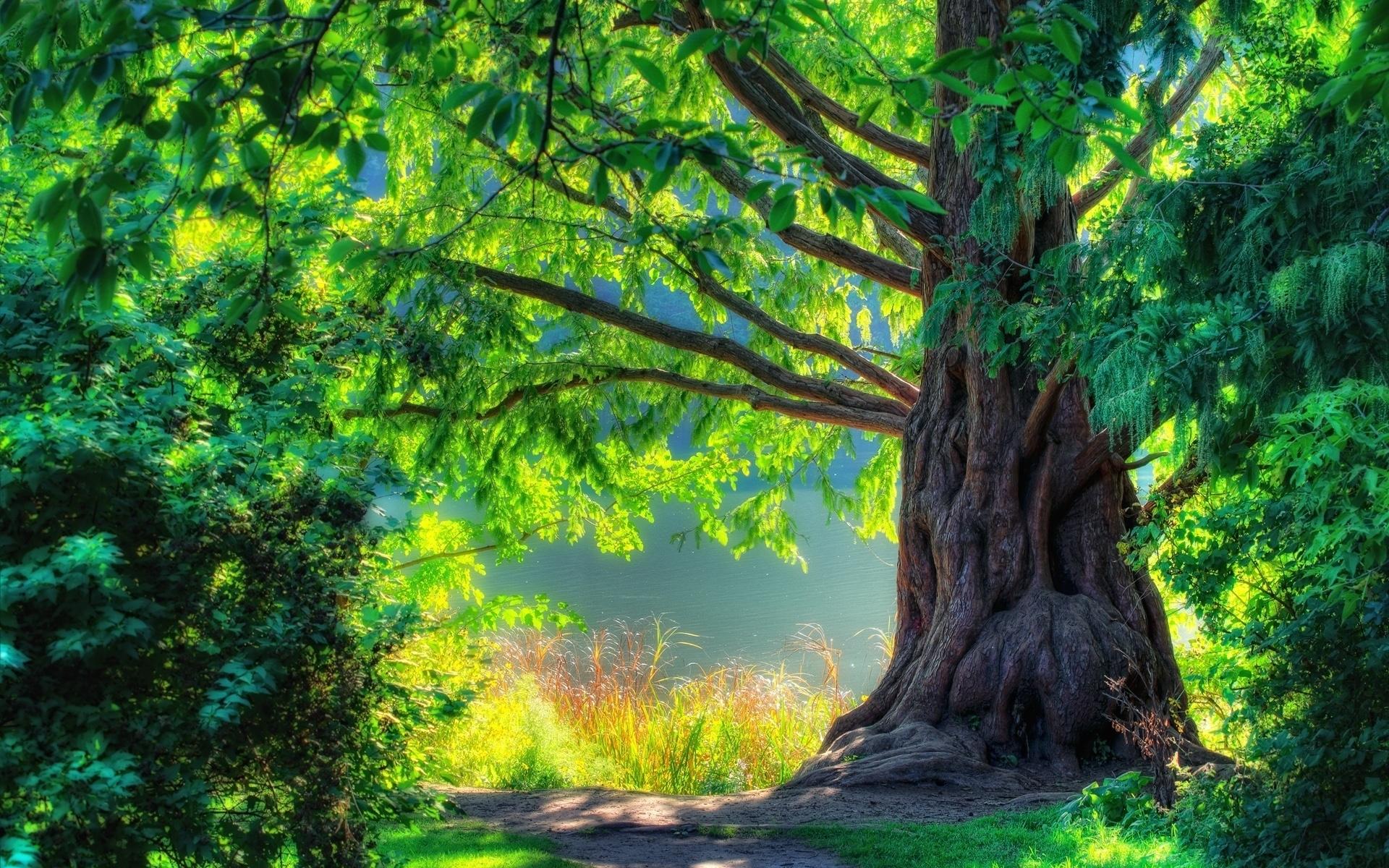 20294 скачать обои Пейзаж, Деревья - заставки и картинки бесплатно