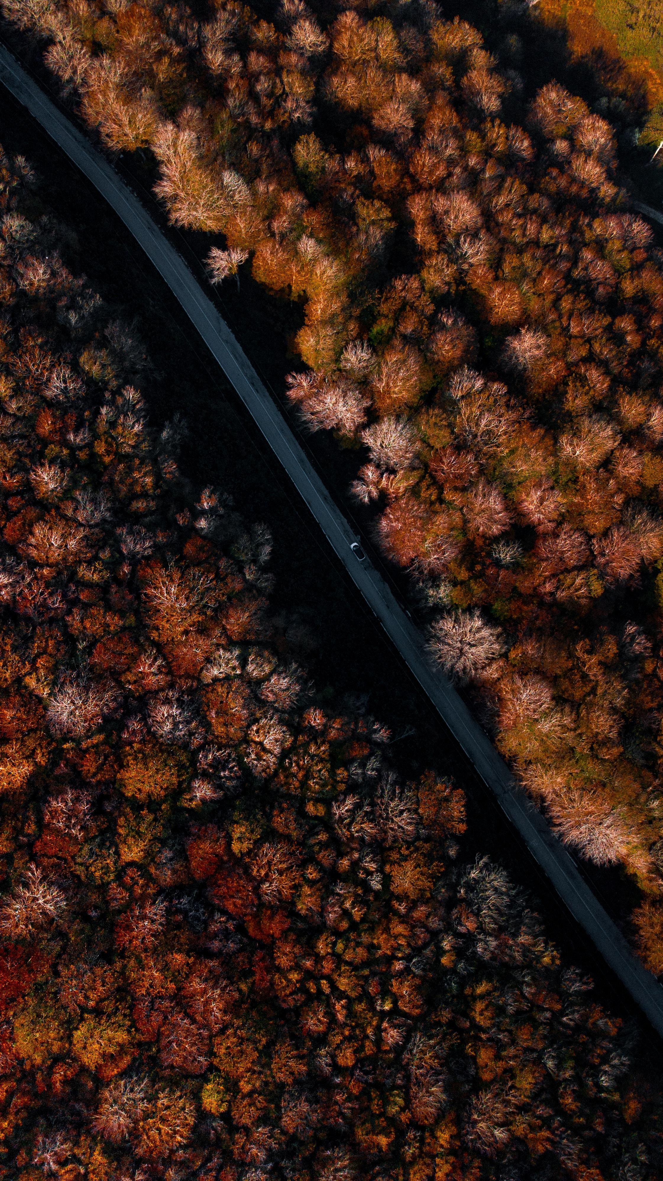 151536 免費下載壁紙 性质, 路, 森林, 秋, 从上面看, 顶视图, 树 屏保和圖片