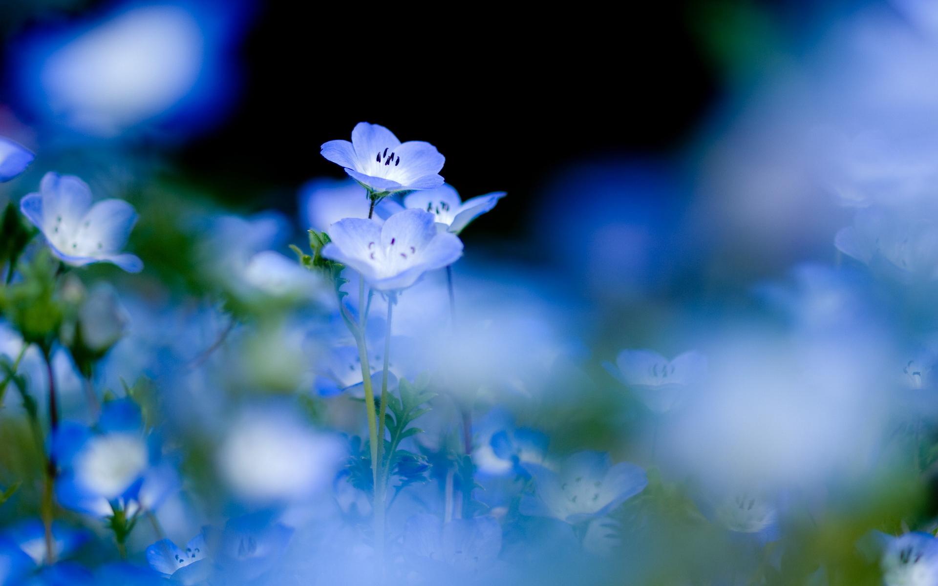 13460 Hintergrundbild herunterladen Pflanzen, Blumen - Bildschirmschoner und Bilder kostenlos