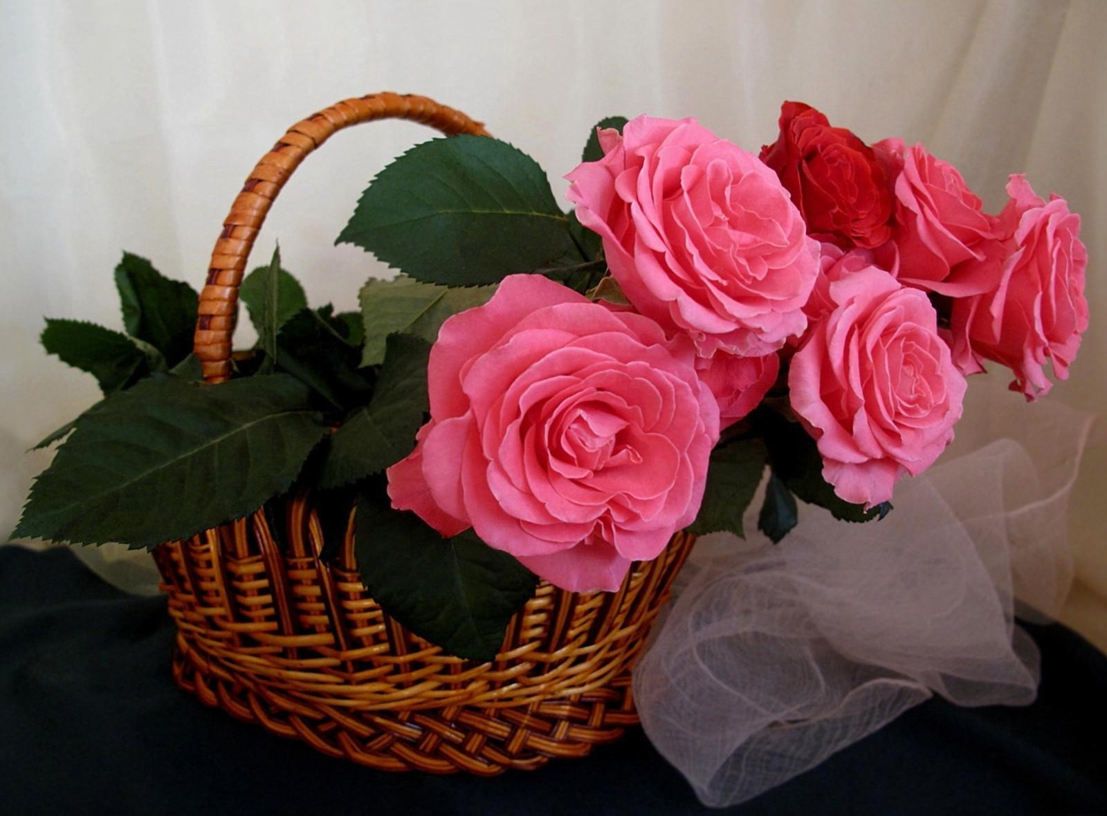 124599 Screensavers and Wallpapers Scarf for phone. Download Flowers, Roses, Basket, Scarf pictures for free