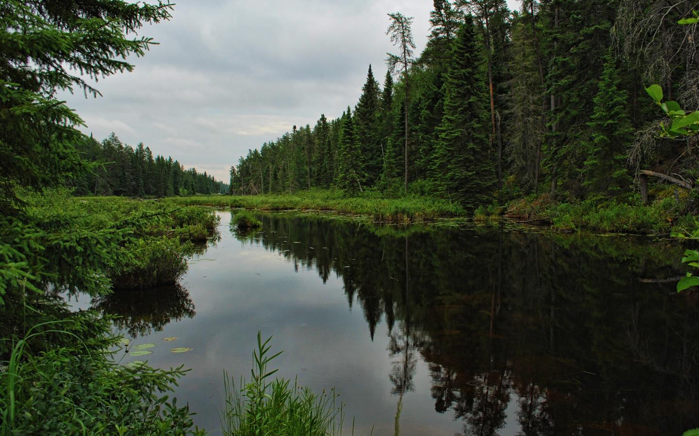 20028 скачать обои Пейзаж, Река, Деревья - заставки и картинки бесплатно