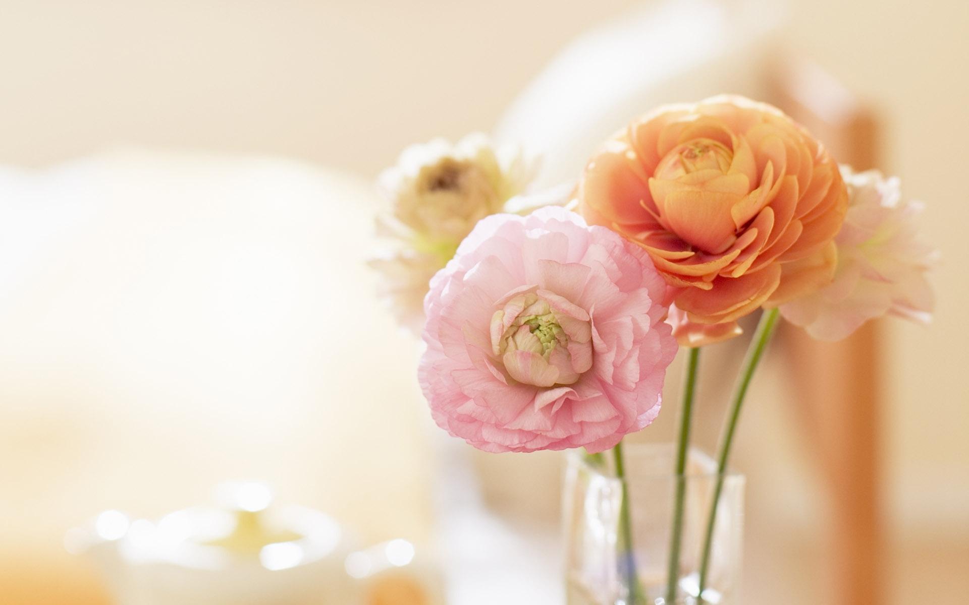 49048 скачать обои Растения, Цветы - заставки и картинки бесплатно