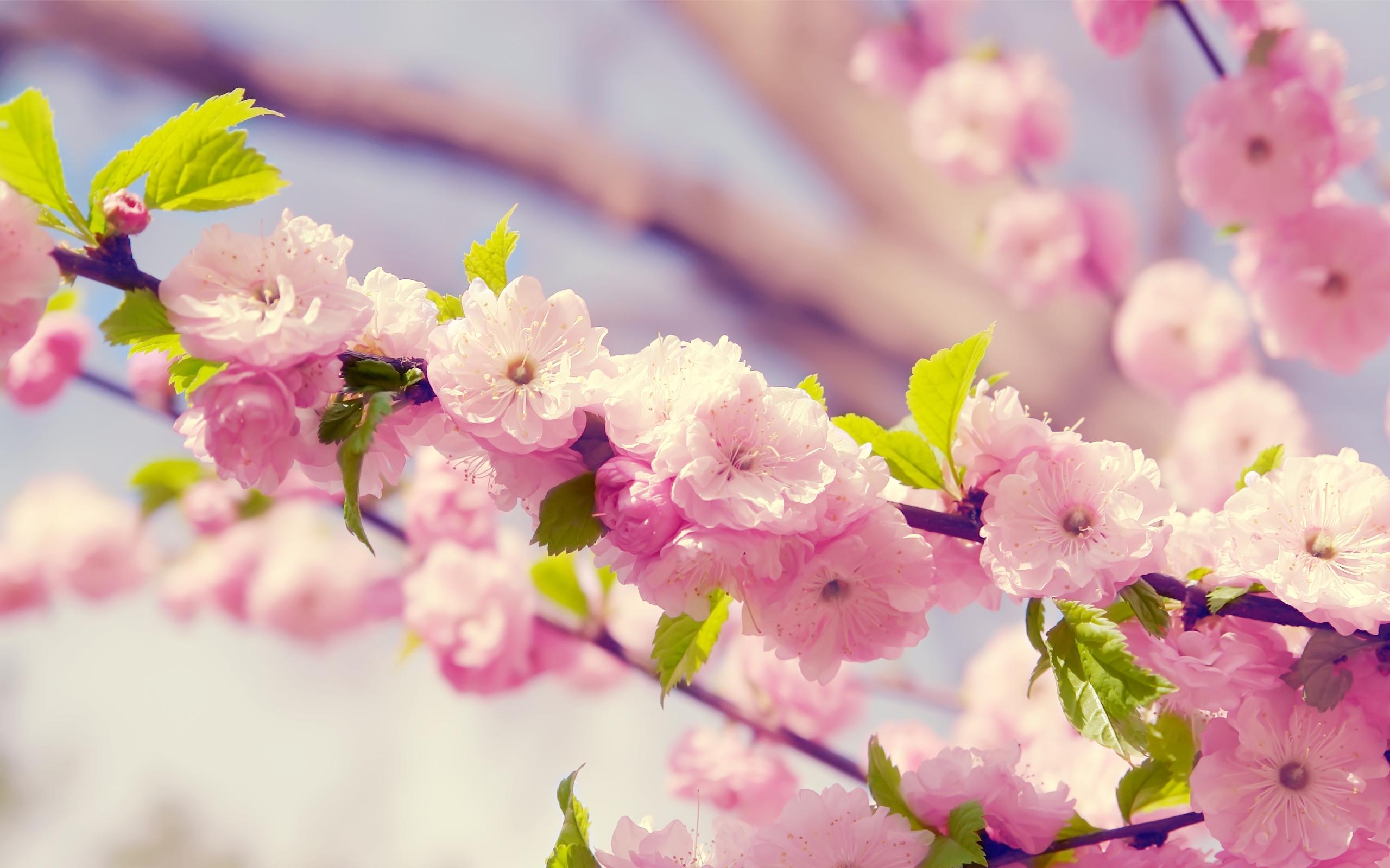 37081 скачать обои Растения, Цветы - заставки и картинки бесплатно