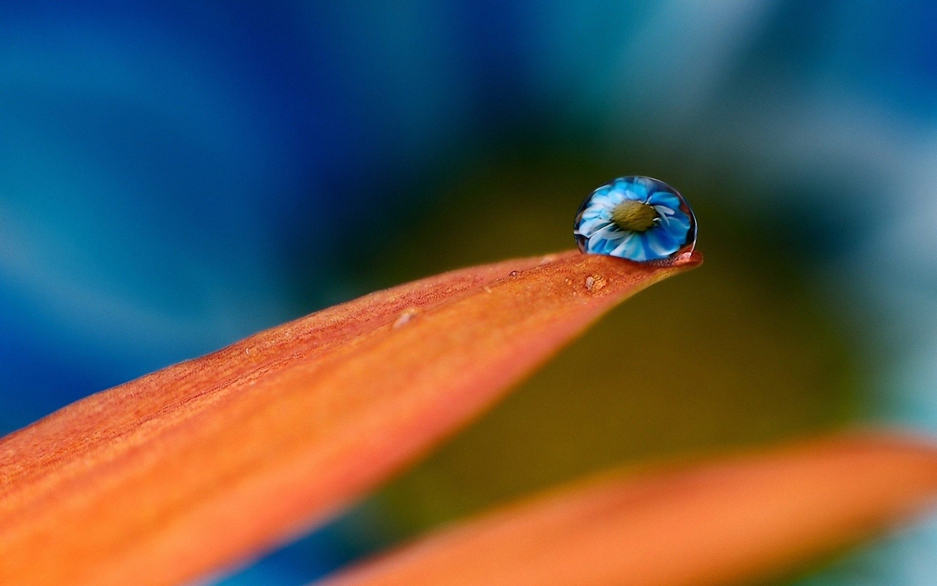 22495 download wallpaper Plants, Flowers, Drops screensavers and pictures for free