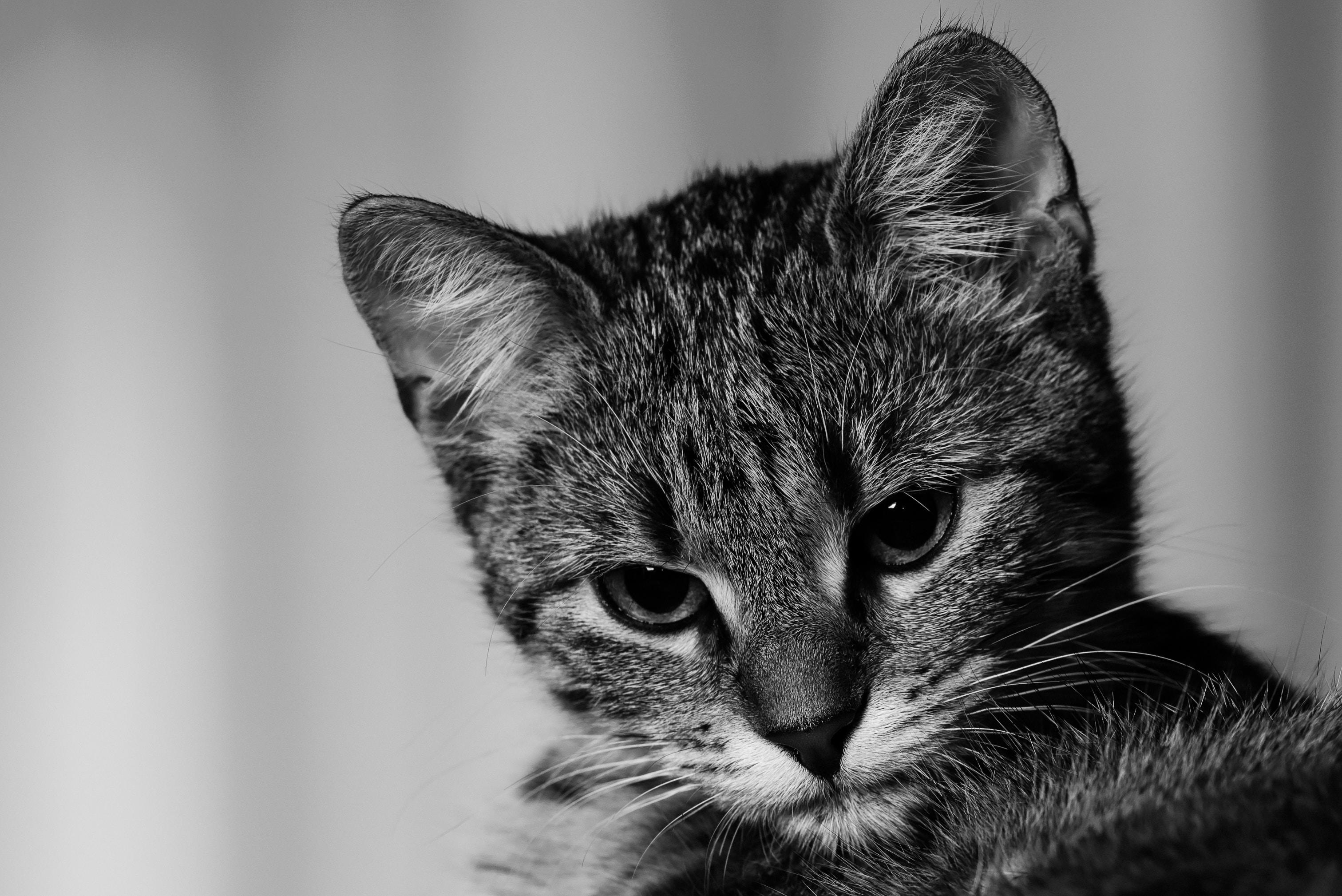 152151 Protetores de tela e papéis de parede Animais em seu telefone. Baixe Animais, Gato, Gatinha, Gatinho, Bicho De Estimação, Animal De Estimação, Bw, Chb fotos gratuitamente