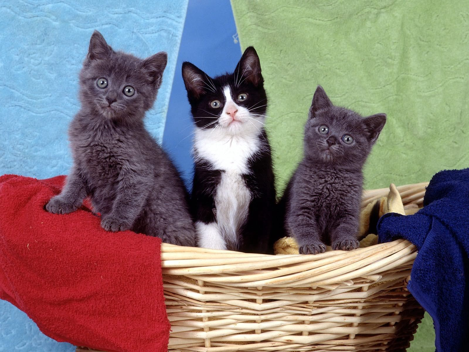 157036 Screensavers and Wallpapers Kittens for phone. Download Animals, Sit, Basket, Toddlers, Kids, Kittens pictures for free