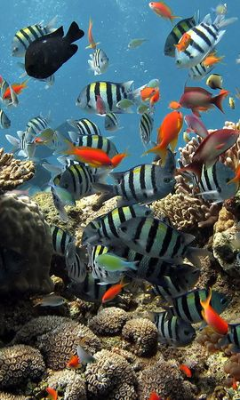 14256 download wallpaper Animals, Fishes screensavers and pictures for free