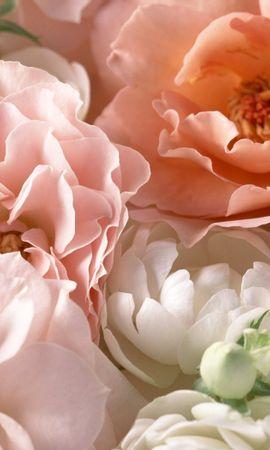 26497 скачать обои Растения, Цветы, Розы - заставки и картинки бесплатно