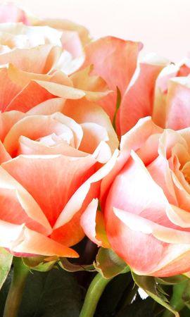 11741 скачать обои Растения, Цветы, Розы, Открытки, 8 Марта - заставки и картинки бесплатно