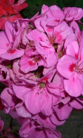 6831 скачать обои Растения, Цветы - заставки и картинки бесплатно