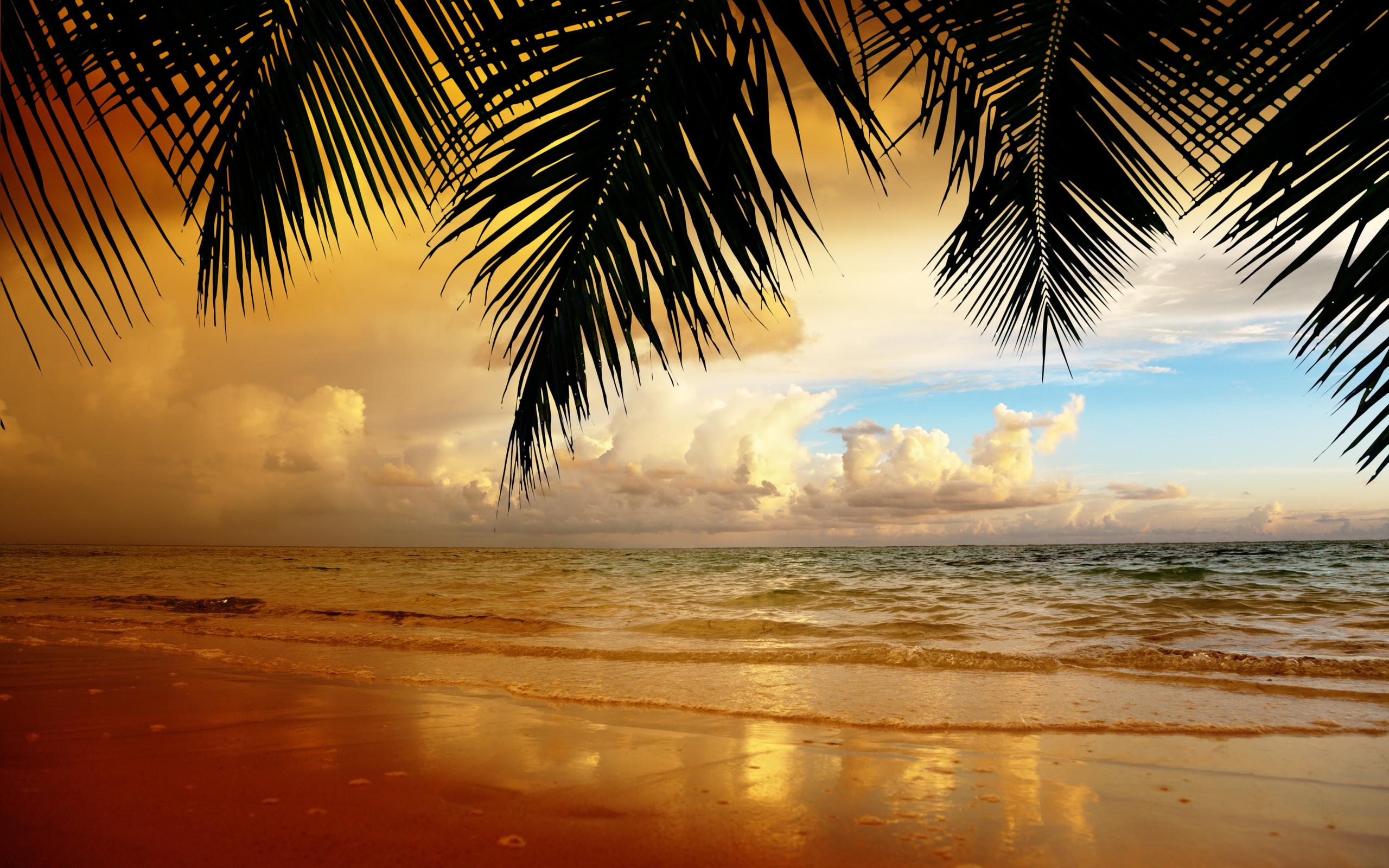 16932 скачать обои Пейзаж, Закат, Море, Пляж, Пальмы - заставки и картинки бесплатно