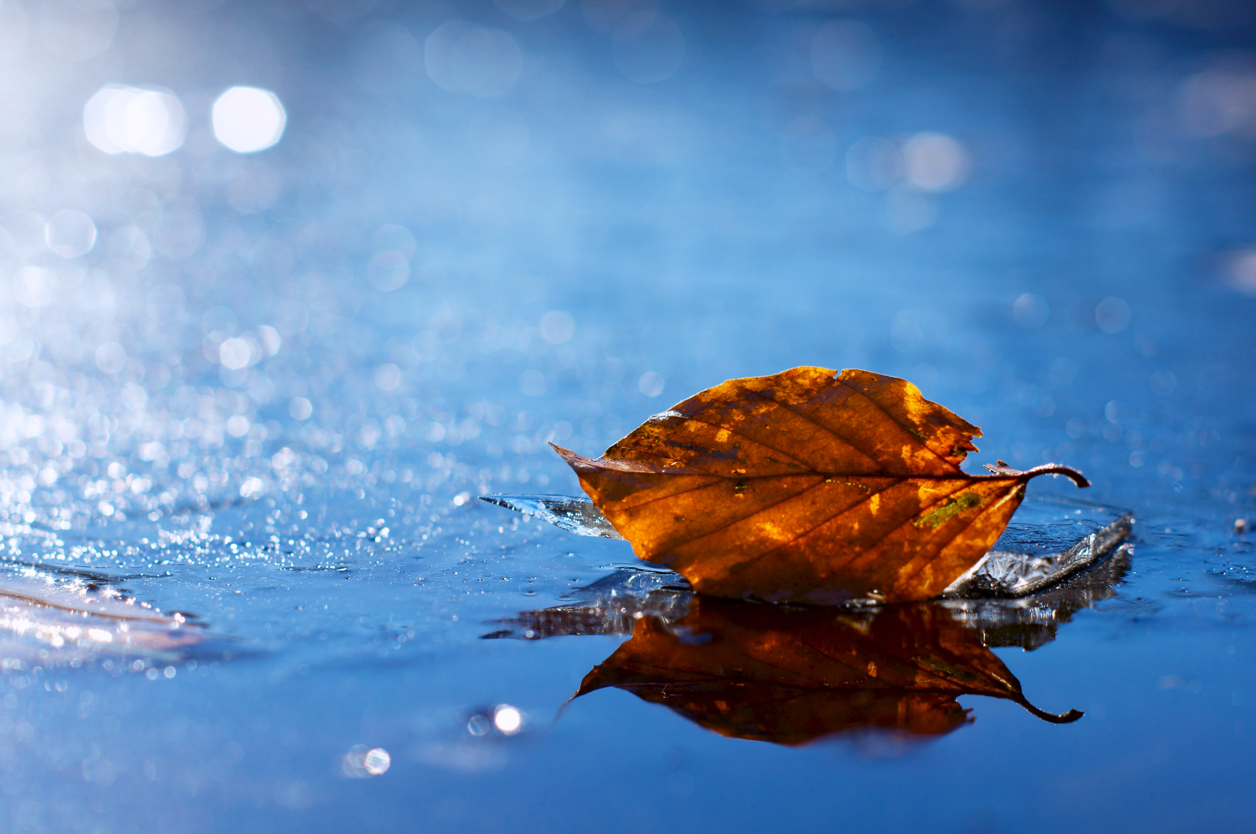 115753 download wallpaper Autumn, Water, Macro, Liquid, Sheet, Leaf, Dry, Fallen screensavers and pictures for free