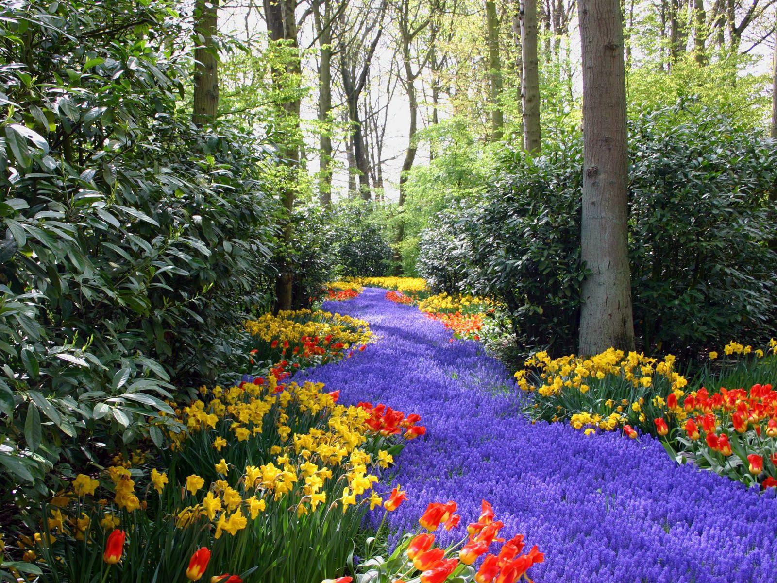 73287 Заставки и Обои Нарциссы на телефон. Скачать Тюльпаны, Природа, Цветы, Деревья, Нарциссы, Сиреневые картинки бесплатно