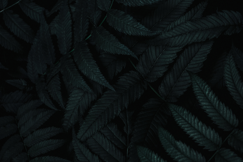140035 Заставки и Обои Темные на телефон. Скачать Темные, Листья, Растение, Темный, Резной, Куст картинки бесплатно
