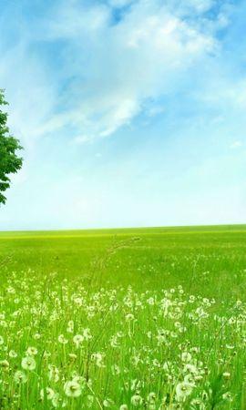 20523 скачать обои Пейзаж, Деревья, Поля, Небо - заставки и картинки бесплатно