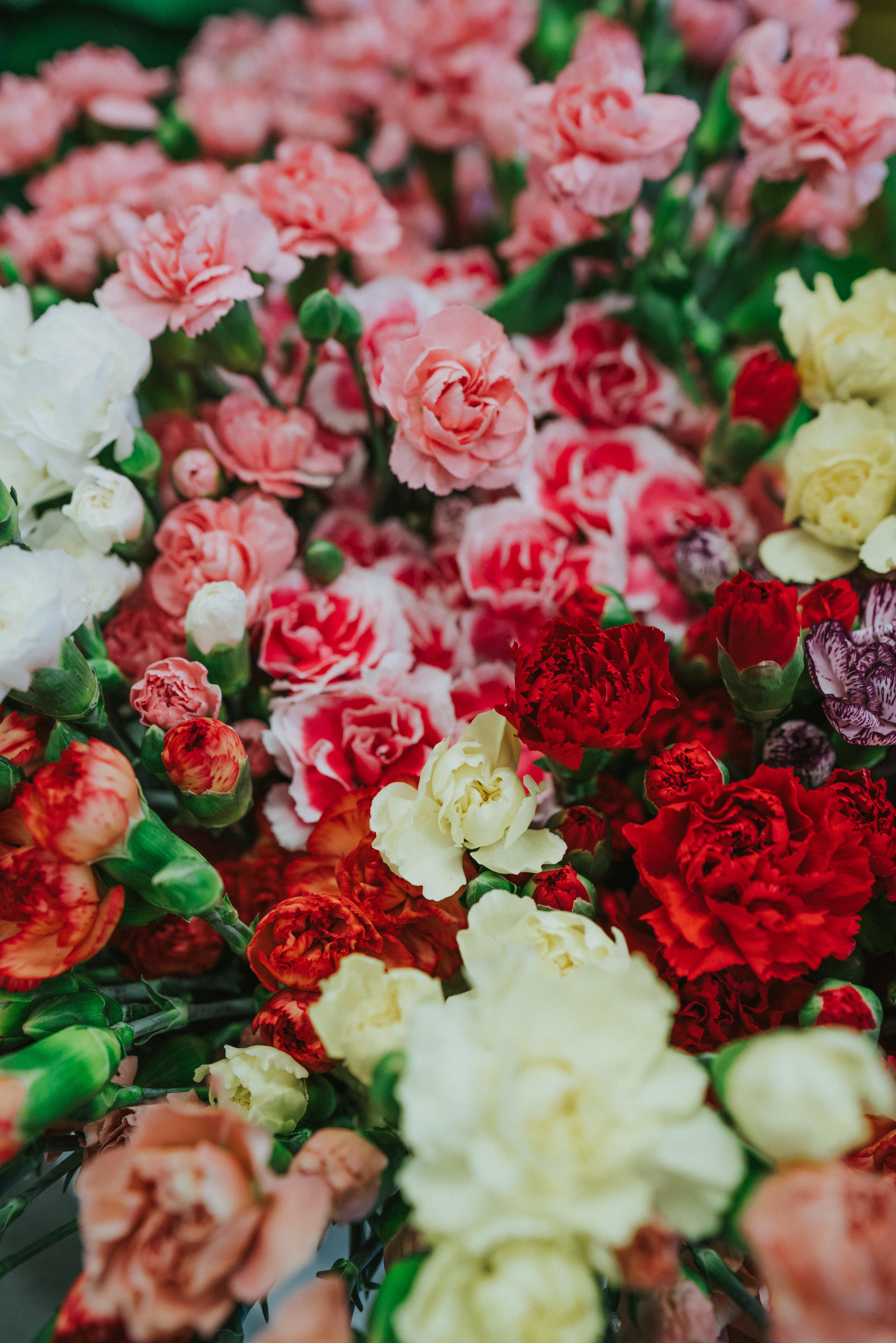 50828 скачать обои Гвоздики, Цветы, Разноцветный, Букет - заставки и картинки бесплатно