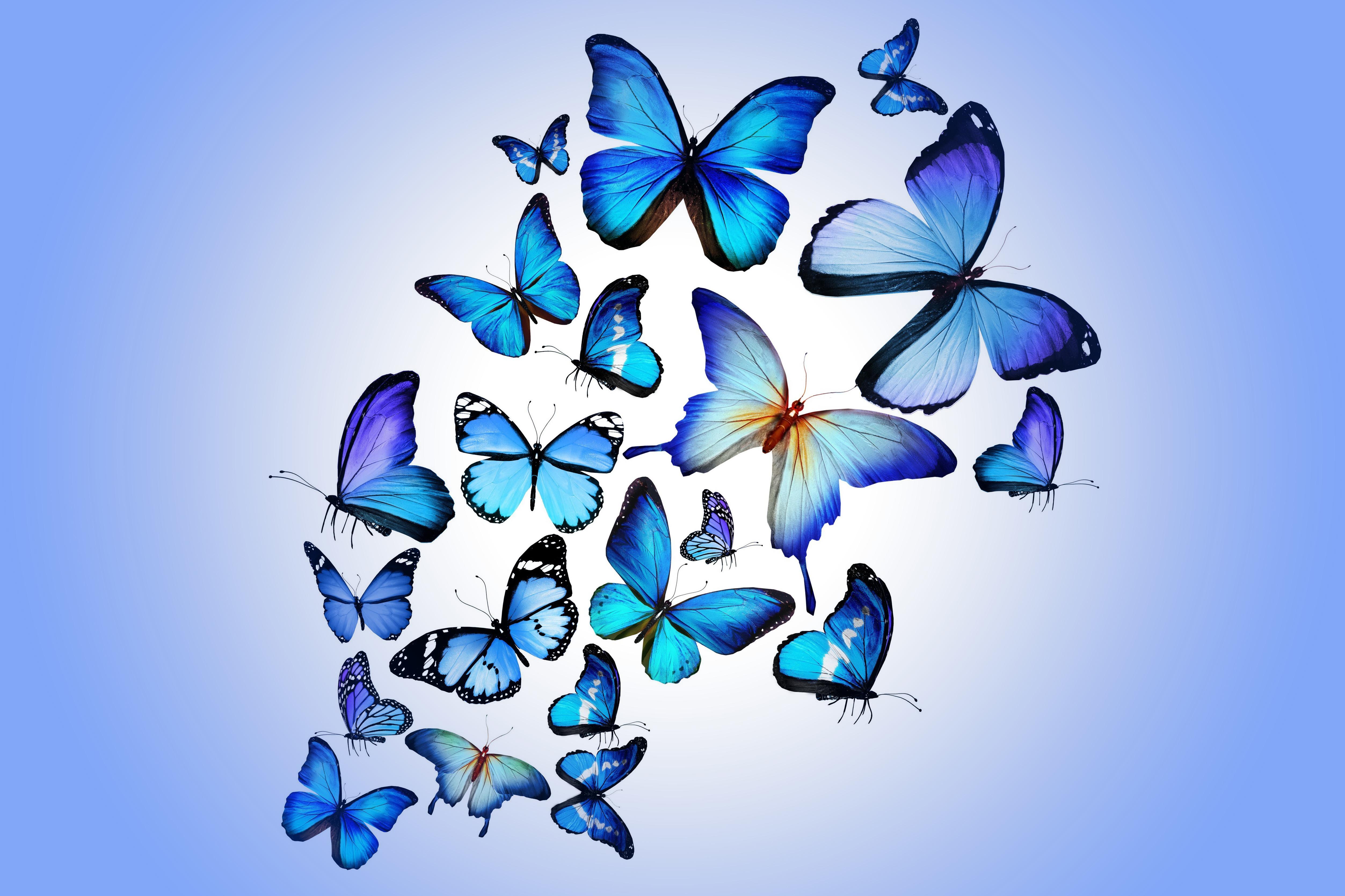121254 скачать обои Бабочки, Красиво, Арт, Разноцветный, Синий, Рисунок - заставки и картинки бесплатно