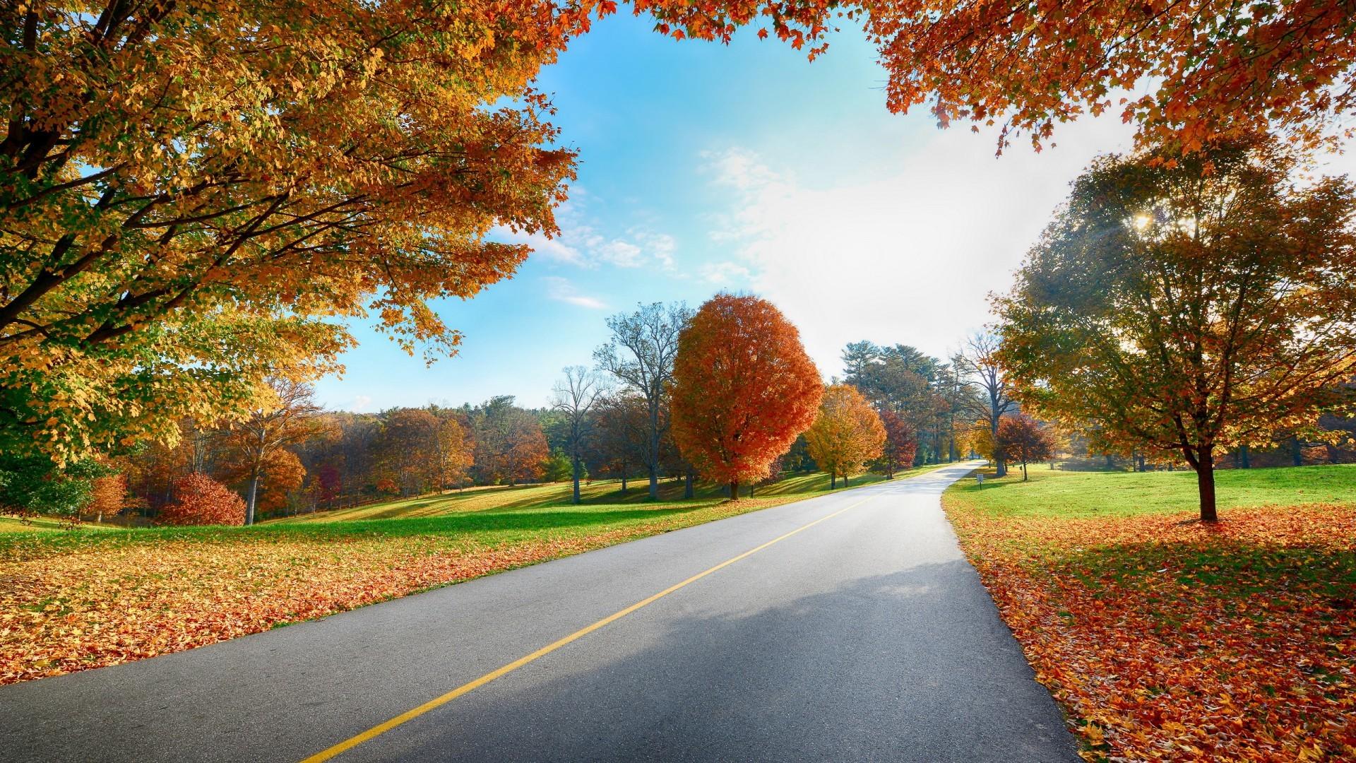 20675 скачать обои Пейзаж, Деревья, Дороги, Осень, Листья - заставки и картинки бесплатно