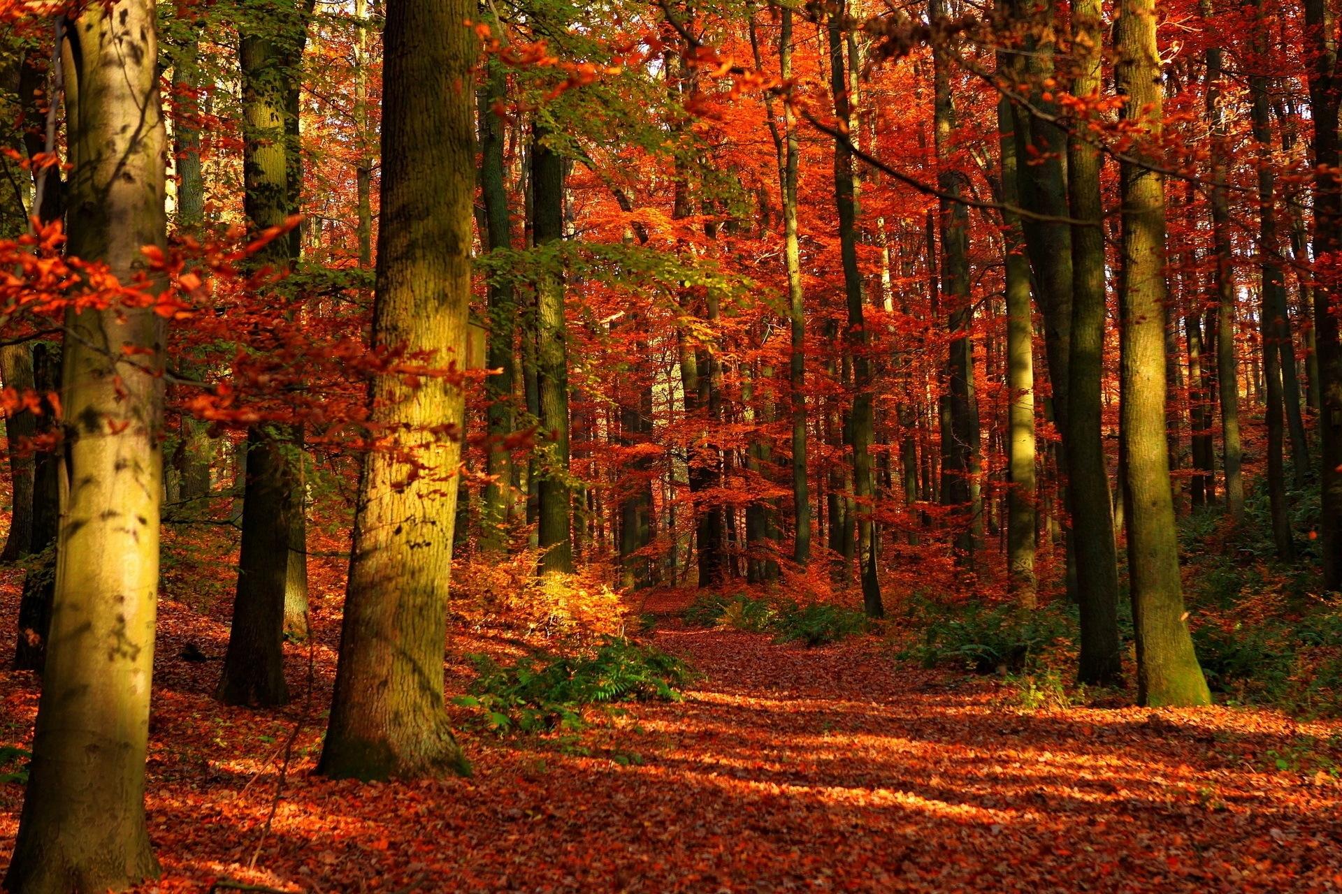 75605 скачать обои Осень, Природа, Лес, Деревья, Листья, Просветы - заставки и картинки бесплатно