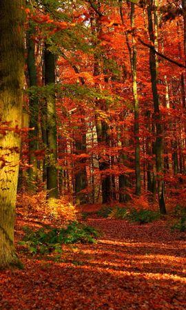 75605 скачать обои Природа, Осень, Лес, Листья, Деревья, Просветы - заставки и картинки бесплатно