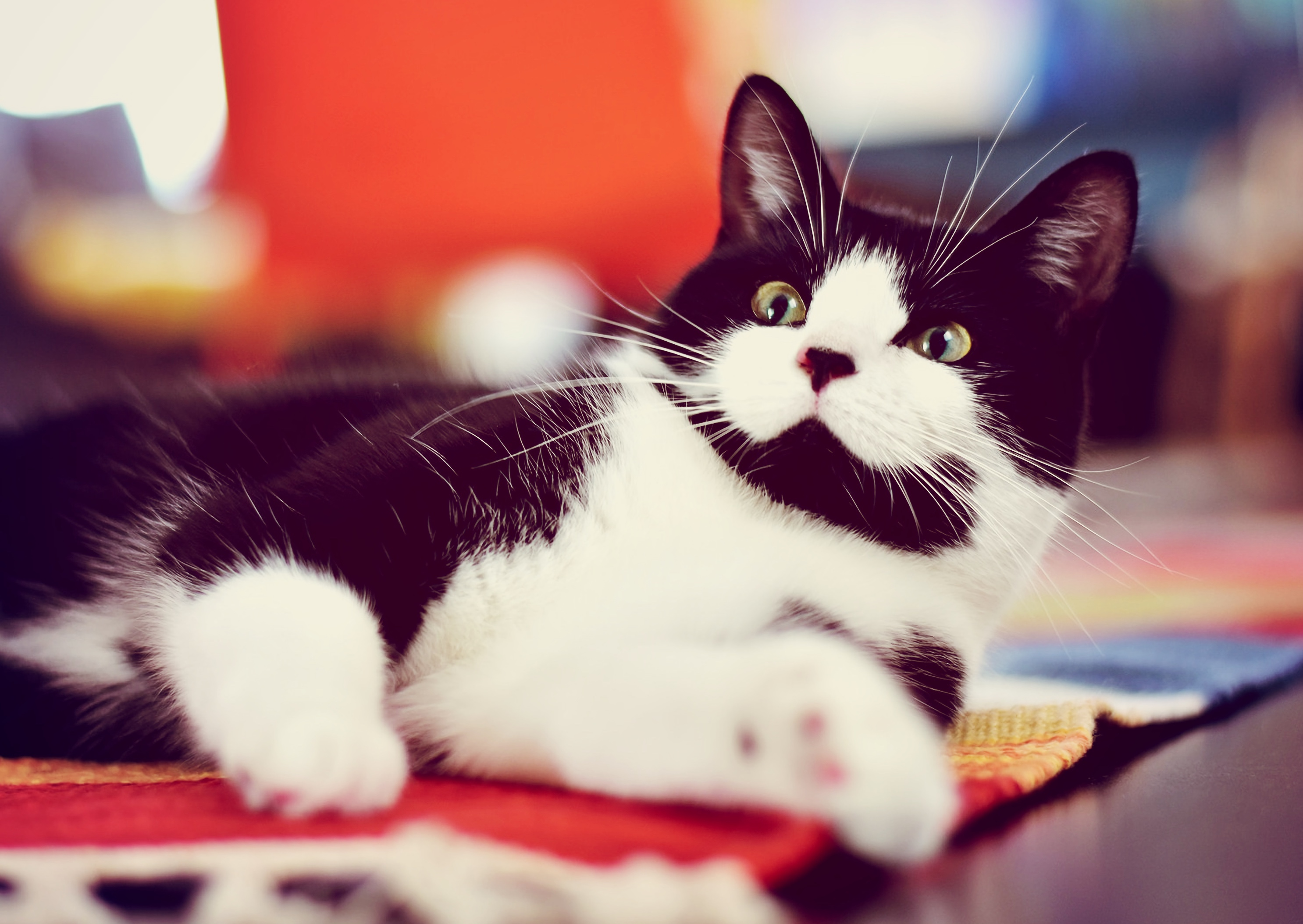 132306 download wallpaper Animals, Cat, Spotted, Spotty, Nice, Sweetheart, Lies screensavers and pictures for free