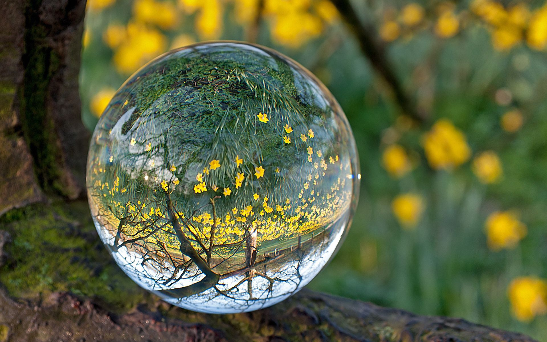 59211 download wallpaper Grass, Reflection, Transparent, Macro, Glass, Ball screensavers and pictures for free
