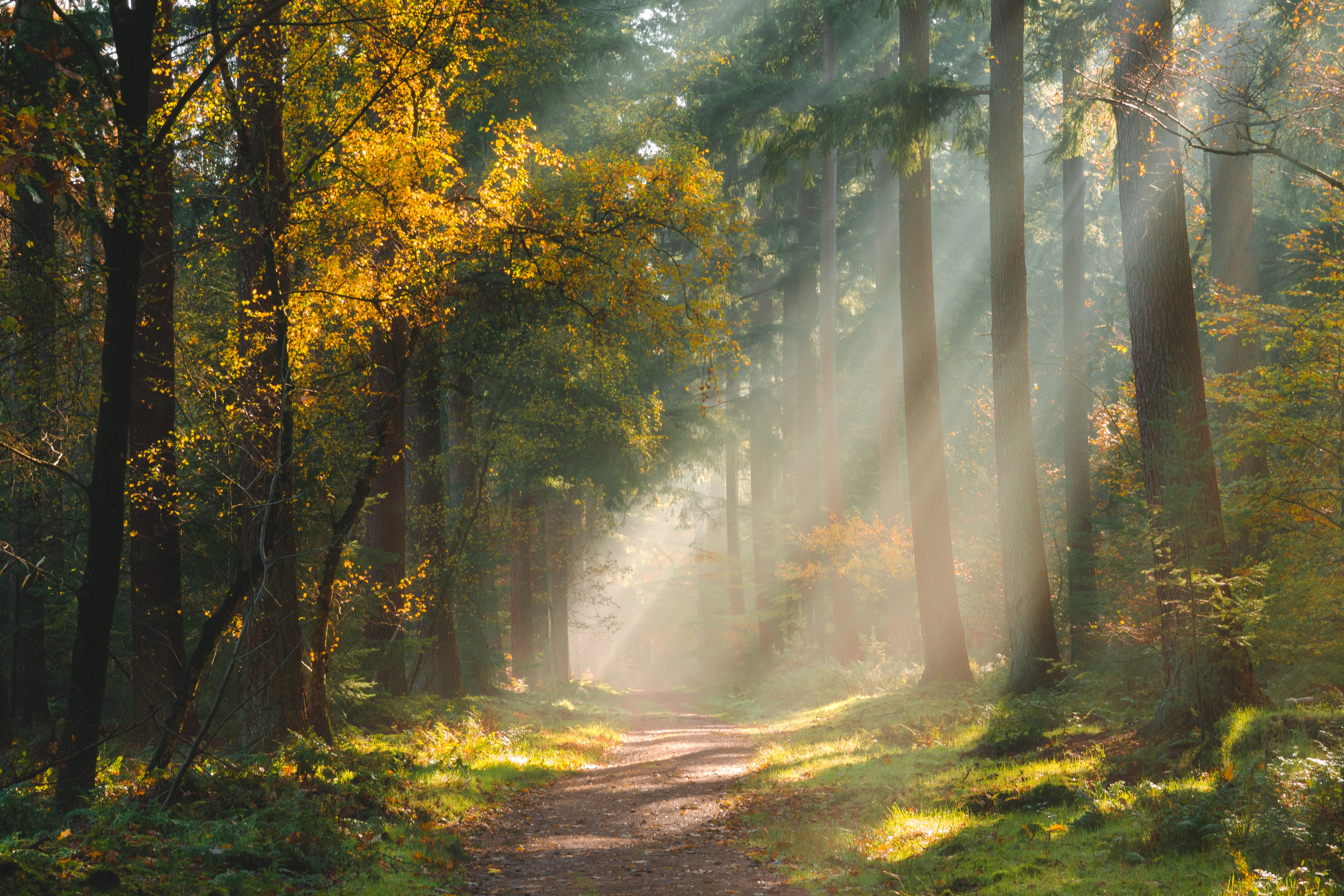76393 download wallpaper Forest, Nature, Trees, Shine, Light, Path screensavers and pictures for free