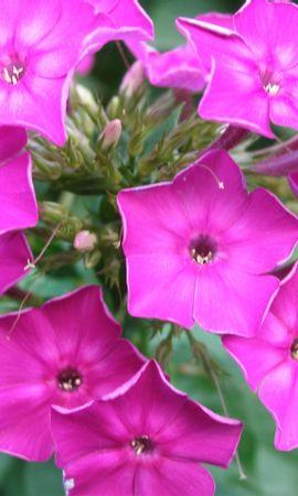 10124 скачать обои Растения, Цветы - заставки и картинки бесплатно