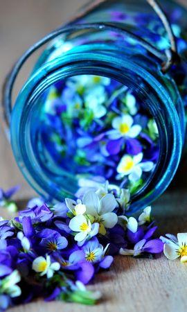 41036 télécharger le fond d'écran Plantes, Fleurs - économiseurs d'écran et images gratuitement