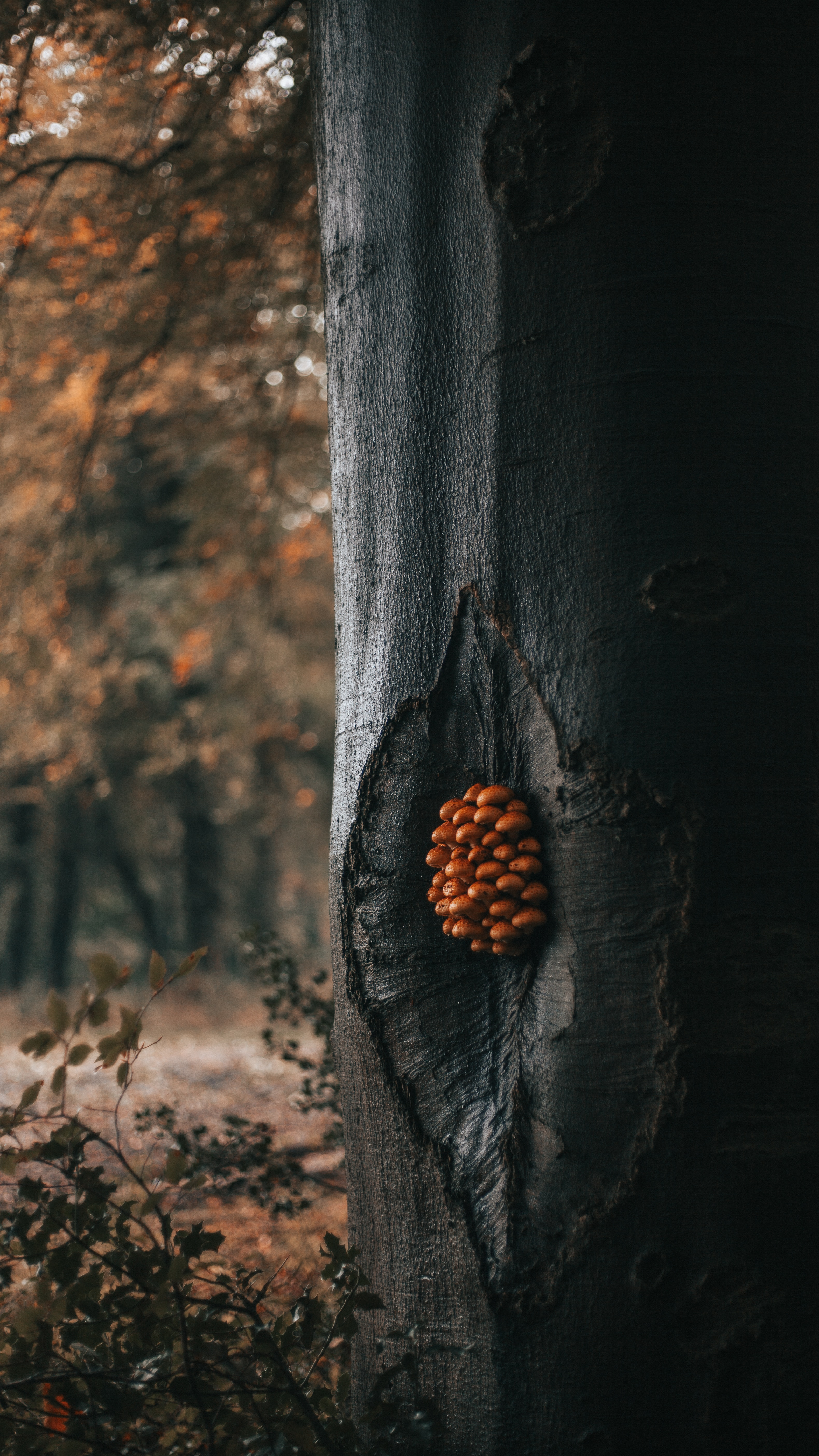 60047 Screensavers and Wallpapers Mashrooms for phone. Download Nature, Mashrooms, Wood, Forest, Tree, Trunk pictures for free