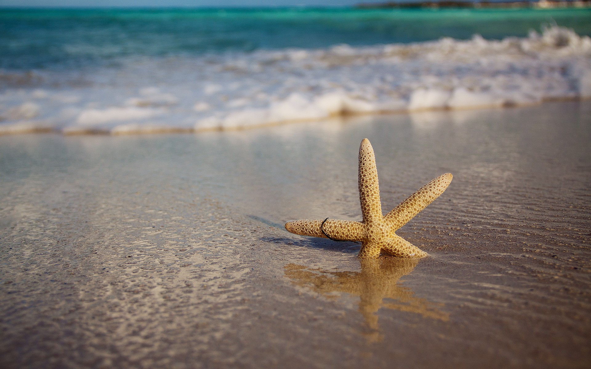 33815 download wallpaper Background, Starfish screensavers and pictures for free