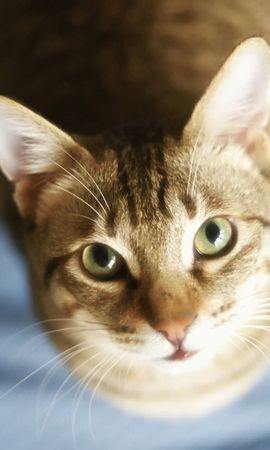 9065 download wallpaper Animals, Cats screensavers and pictures for free
