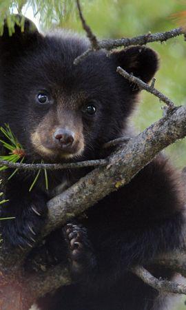 46088 baixar papel de parede Animais, Bears - protetores de tela e imagens gratuitamente