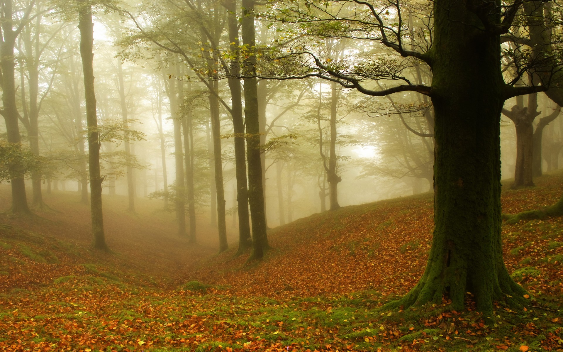 21962 скачать обои Пейзаж, Деревья, Осень, Листья - заставки и картинки бесплатно