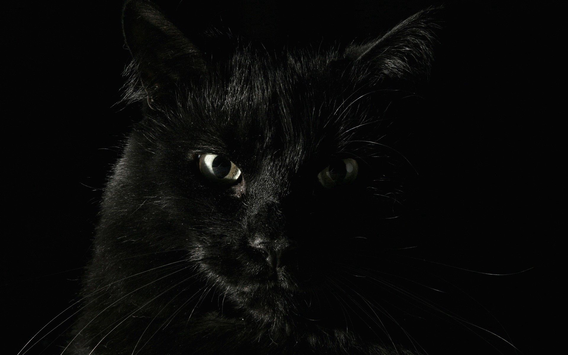 111347 download wallpaper Fear, Cat, Muzzle, Eyes screensavers and pictures for free